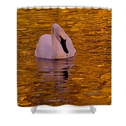 A Swan On Golden Waters Shower Curtain