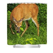 A Taste Of Nature Shower Curtain