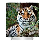 A Tigers Glance Shower Curtain