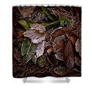A Touch Of Frost Shower Curtain