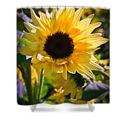 A Touch Of Sunflower Shower Curtain
