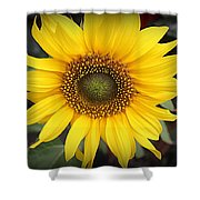 A Touch Of Sunshine - Sunflower Shower Curtain