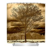 A Tree At Appleton Shower Curtain