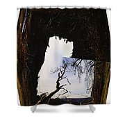 A Tree In A Square Abstract Shower Curtain