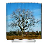 A Tree In Fall... Shower Curtain