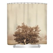 A Tree In The Fog Shower Curtain