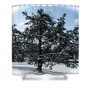 A Tree In Winter Shower Curtain