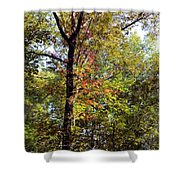 A Tree's Life Shower Curtain