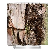 A Treetrunk Abstract Shower Curtain