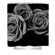 A Trio Of Roses Shower Curtain