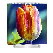 A Tulip Shower Curtain