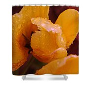 A Tullips Dappled With Rain Shower Curtain
