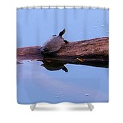 A Turtle Reflecting Shower Curtain