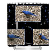 A Typical Eastern Bluebird's Lunch - Featured In Comfortable Art Group Shower Curtain