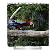 A Very Colorful And Bright Macaw Bird Perched On A Branch Shower Curtain