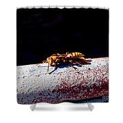 A Vespid Wasp  Shower Curtain