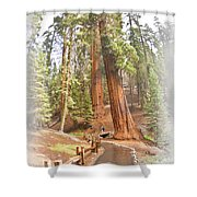 A Walk Among The Giant Sequoias Shower Curtain