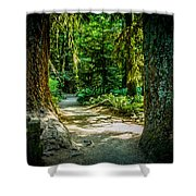 Pathway Cathedral Grove Shower Curtain