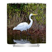 A Walk In The Wetlands Shower Curtain