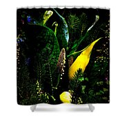 A Walk In The Woods 4 Shower Curtain