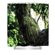 A Walk In The Woods 6 Shower Curtain