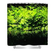A Walk In The Woods 7 Shower Curtain