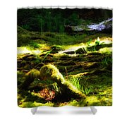 A Walk In The Woods 8 Shower Curtain