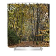 A Walk In The Woods II Shower Curtain
