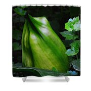 A Walk In The Woods1 Shower Curtain