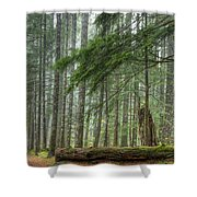 A Walk Through The Forest Shower Curtain
