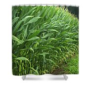 A Wall Of Corn Shower Curtain