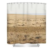 A White Mustang Feeds On Dry Grass Fields Of Arizona Shower Curtain