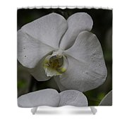 A White Orchid Flower Inside The National Orchid Shower Curtain