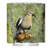 A White Winged Dove  Shower Curtain
