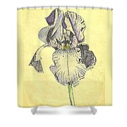 A Wild Lavender Louisiana Iris Shower Curtain