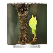A Winter Sprout Shower Curtain