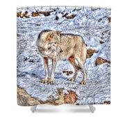 A Wolf In Winter Shower Curtain by Skye Ryan-Evans