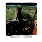 A Woman Sits In Her Safari Jeep Shower Curtain