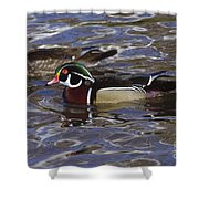 A Wood Duck Pair  Shower Curtain
