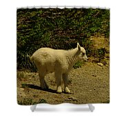 A Young Mountain Goat Shower Curtain