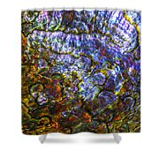 Abalone Shell 3 Shower Curtain
