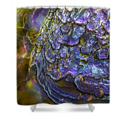 Abalone Shell 6 Shower Curtain