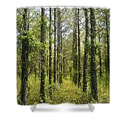 Abandoned Forest In Scott Arkansas Shower Curtain