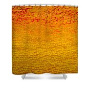 About 2500 Tigers Shower Curtain by Charlie Baird