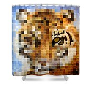 About 400 Sumatran Tigers Shower Curtain by Charlie Baird