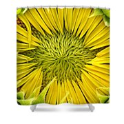 About To Be A Sunflower Shower Curtain