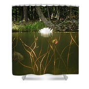 Above And Below Shower Curtain