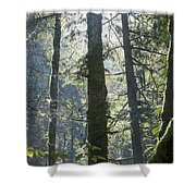 Above The Firs Shower Curtain