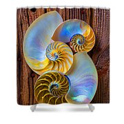 Abstract Chambered Nautilus Shower Curtain