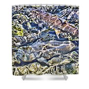 Abstract Fish 3 Shower Curtain